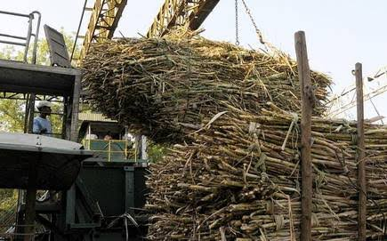 Most Sugar mills must stop producing sugar and electricity