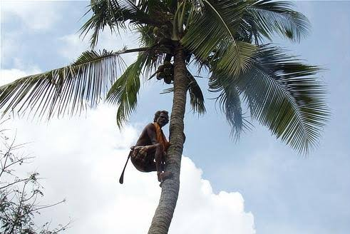 Coconut tree climbing robot – where are you?